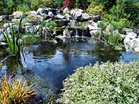 Japanese Water Garden Designs