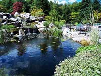 Japanese Water Garden Design with Koi pond.