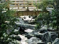 Japanese Water Garden Designs & Japanese Koi Pond design
